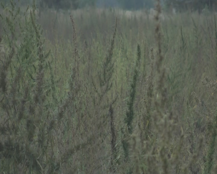 На территории Северодонецкого лесхоза милиционеры ...: http://www.ostro.org/lugansk/criminal/news/426798/